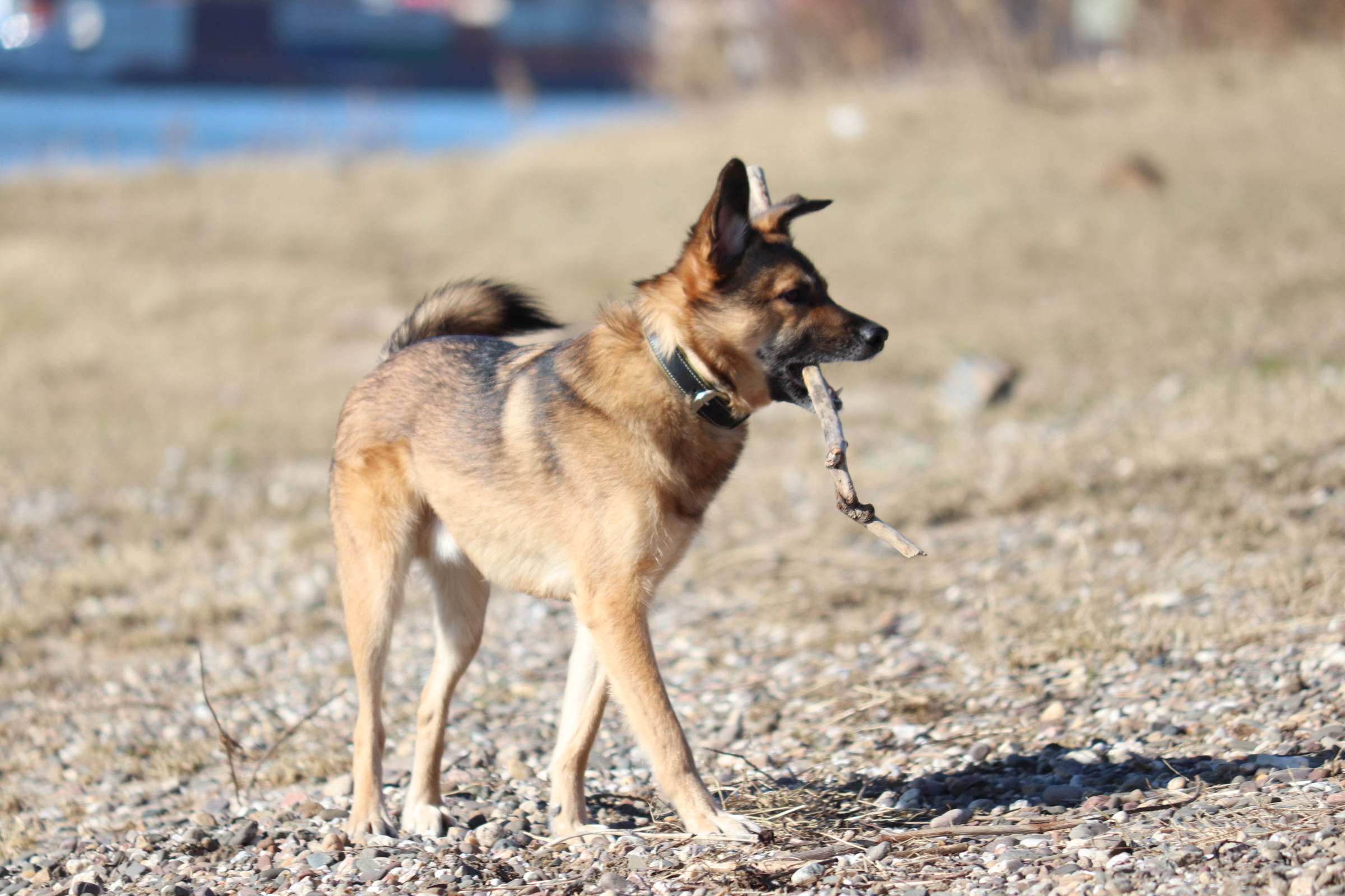 Wie finde ich einen Hund vom Auslandstierschutz?