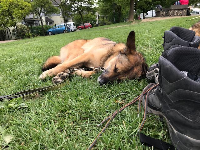 Der Straßenhund – PROLOG