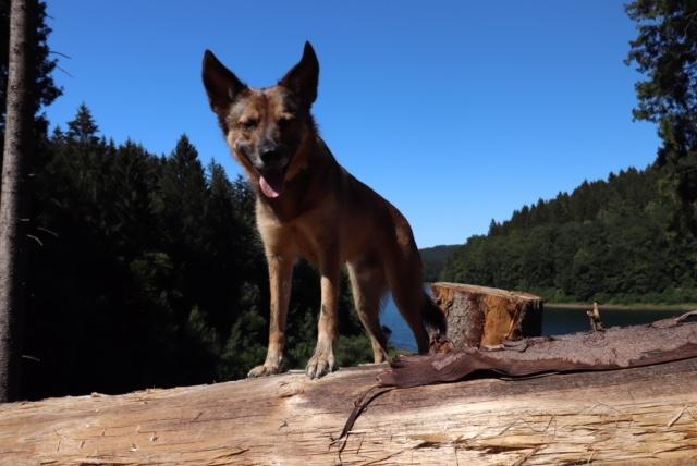 Mit Hund an der Genkeltalsperre