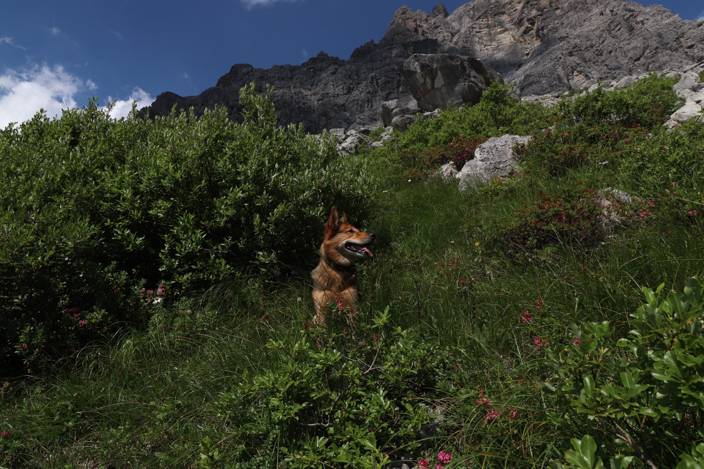 Käser Alpe