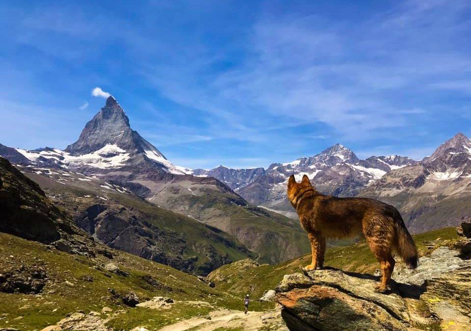 In Zermatt mit dem Hund – Blick aufs Matterhorn